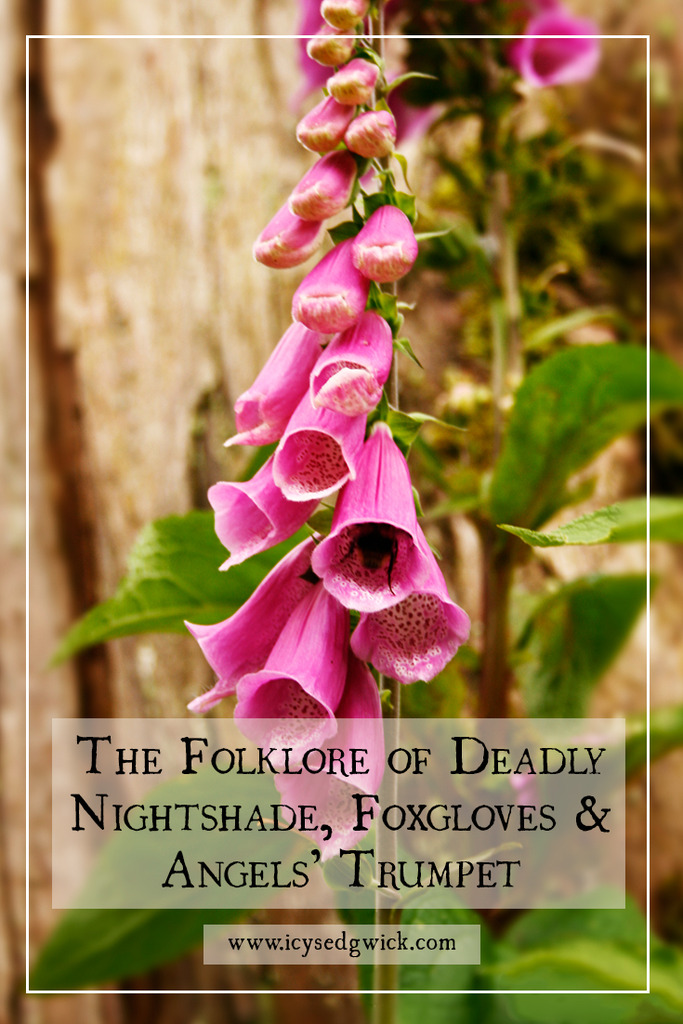 The folklore of flowers is a huge topic, so this post focuses on the folklore and magical properties of Deadly Nightshade, Foxgloves and Angel's trumpet as poisonous plants.