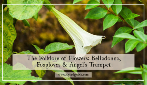 If you grow deadly nightshade, foxgloves or angel's trumpet, you might be interested in some of their associated folklore! Click here to read more.