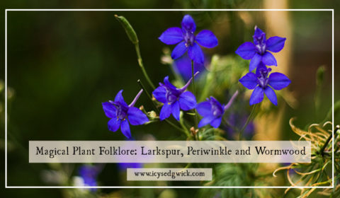 Magical Plant Folklore: Larkspur, Periwinkle and Wormwood