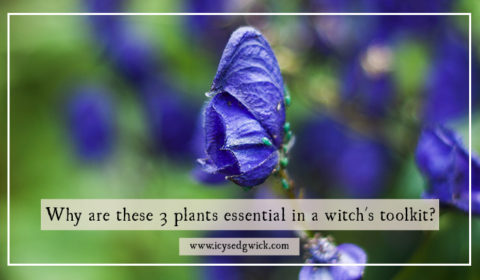 Why are these 3 plants essential in a witch's toolkit?