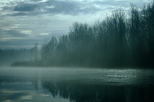 An image of a spooky looking river.