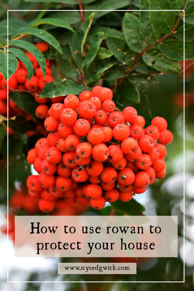 Rowan is a popular tree for protecting against witchcraft and fairies. But how did people use rowan to get the most from its protective abilities?
