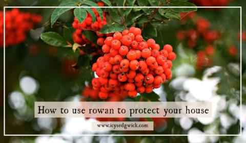 How to use rowan to protect your house (and livestock)