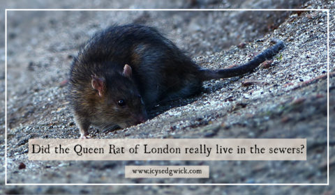 Sewers are never a fun place to be. But it's worse if you're worried you might fall prey to the Queen Rat of London. Find out who - and what - she is.