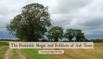 Ash trees have links with the Nordic world and the folklore of Ireland and Britain. But why are they so magical and what are their links with healing? Click here to learn more.