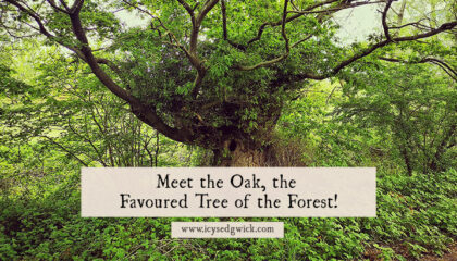 The oak tree is pretty synonymous with the English landscape, from the National Trust logo to the Major Oak that sheltered Robin Hood. Click here to learn more about this awesome tree.