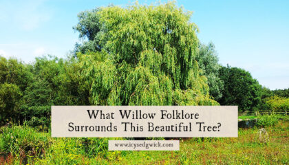 From witchcraft to Christian theology, plenty of willow folklore surrounds this tree. Click here to learn about its lore, superstitions, and folktales.