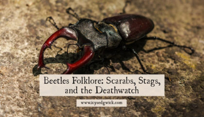 With thousands of species of beetle on Earth, what folklore surrounds them? Click here to learn about scarabs, stag beetles, and the Deathwatch beetle.