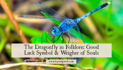 The dragonfly is at once a symbol of prosperity and good luck, and also an evil omen. Learn more of the regional differences in dragonfly folklore.