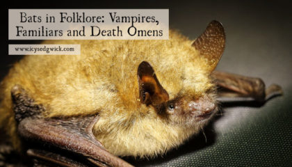 Bats are fascinating creatures and they're helpful to humans. But they fall foul of old folklore and superstitions about them. Click here to learn more.