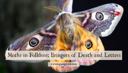 Moths are the darker twin of the butterfly, representing death, bad omens, and...getting letters! They're also linked to urban legends through the figure of the Mothman. But is their creepy reputation deserved? Click here to learn more about moth superstitions and folklore.