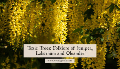 Many blogs focus on poisonous plant folklore but they forget about toxic trees. Learn more about the lore of juniper, laburnum, and oleander.