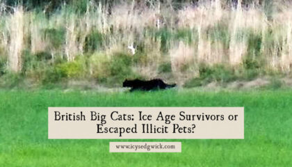 British big cats are not true cryptids since some sightings are of genuine big cats. But what of the others? Are they mere urban legend or actually real?