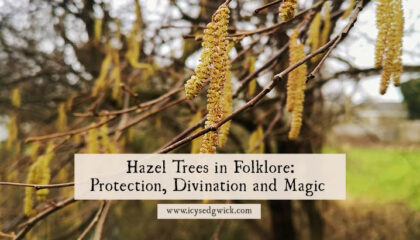 Hazel trees appear as magical trees in both myth and legend. Learn how they were used for divination, magic, and protection from disaster!